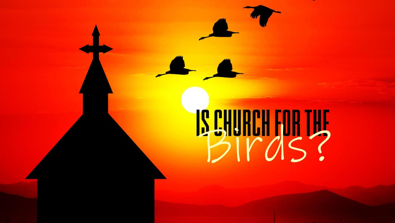 Is Church for the Birds?