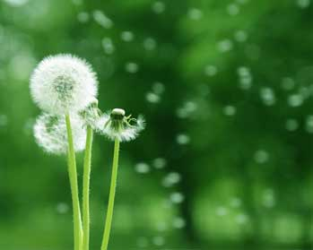 Thinking Wisely Stories - Dandelions Problem Story