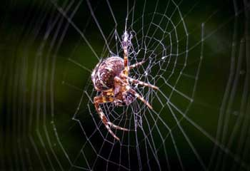 Spider Story in English - Stuck in Life Learning Stories with Best Moral