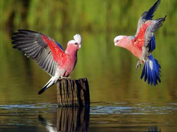 Two Beautiful Parrots Story in English - King and Parrots Moral Short Story