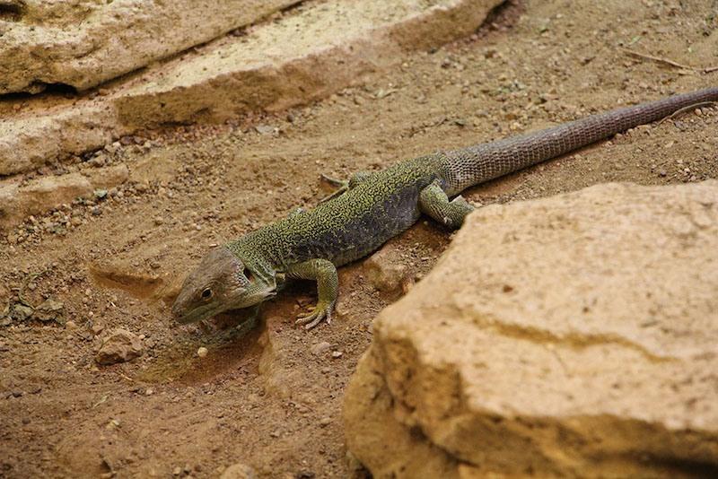 Morandmors_Zoo de Vincennes _12