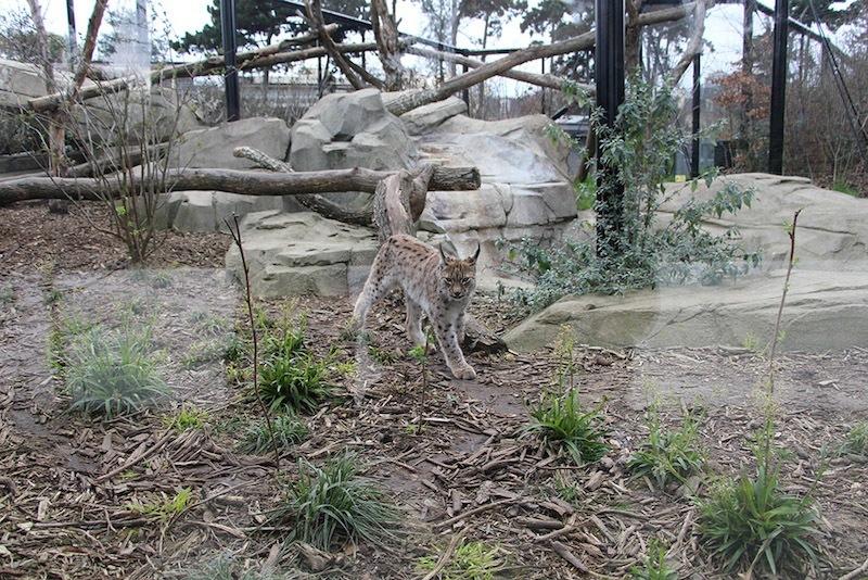 Morandmors_Zoo de Vincennes _17