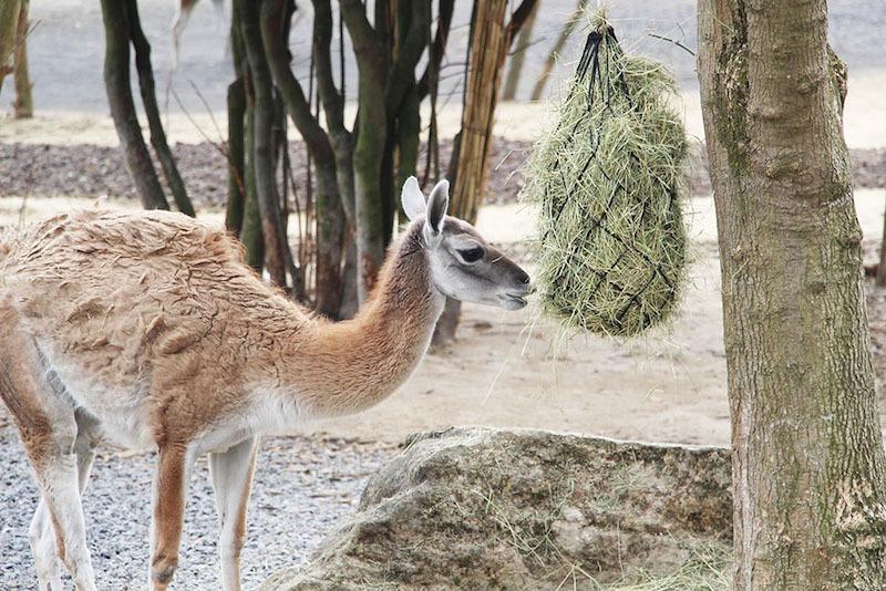 Morandmors_Zoo de Vincennes _3