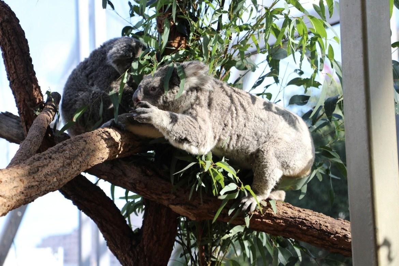 Australie-sydney_morsblog 14