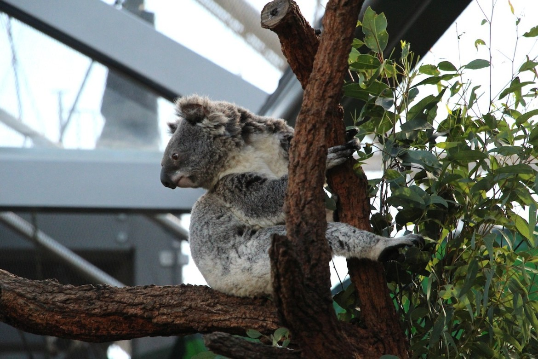 Australie-sydney_morsblog 16