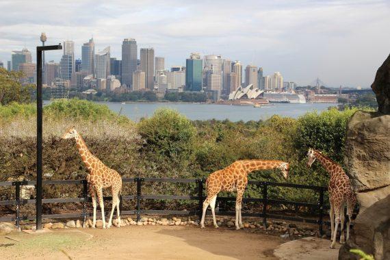 Une balade au Taronga Zoo – Sydney