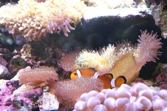 Une balade à l'aquarium Tropical de la Porte Dorée