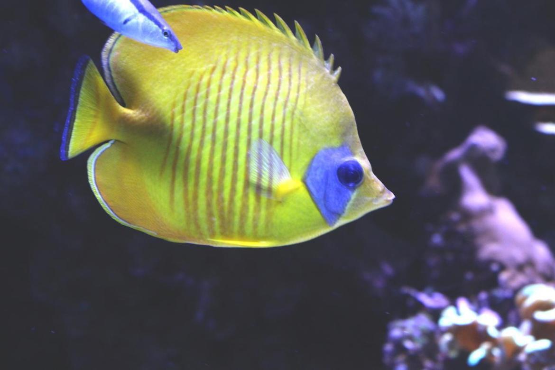 Aquariumportedoree-paris_morsblog 19