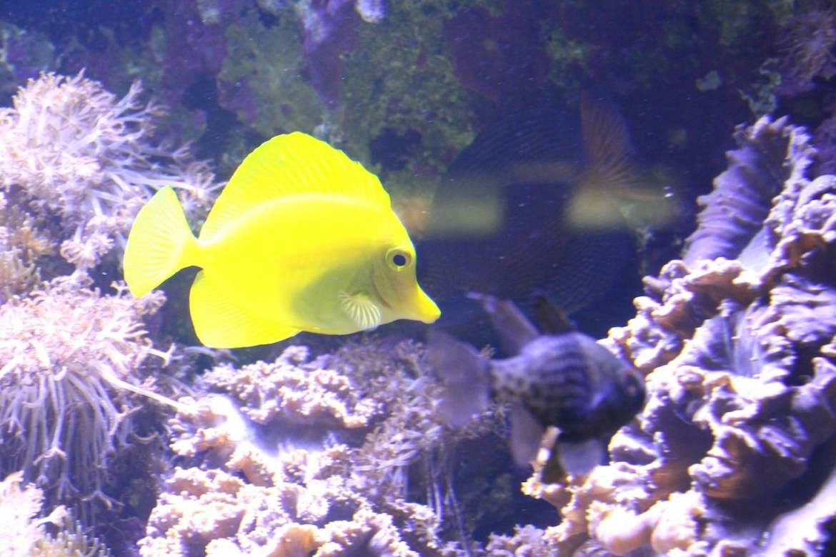 Aquariumportedoree-paris_morsblog 7
