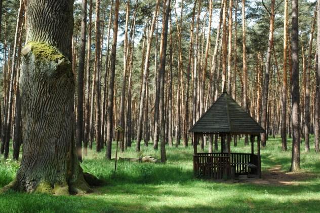 Žilkův dub v Bzenecké doubravě je stár kolem 300 let. Pamatuje časy, kdy Moravská sahara byla ještě doubravou.