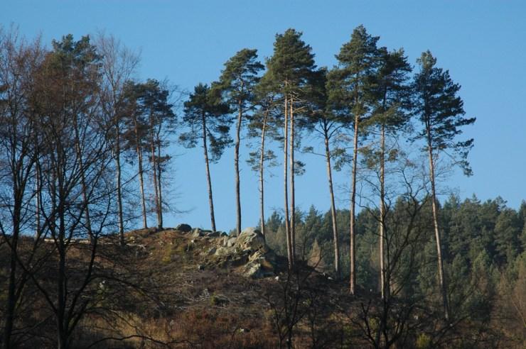 """Skalnatý ostroh nad Klimentským rybníkem. Na četných skalnatých hřbetech se snad ještě vyskytuje původní ekotyp """"malenovické borovice""""."""