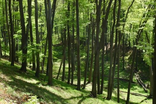 Hradisko na Holém kopci vybudované na přelomu doby bronzové a železné lidem halštatské lužické kultury.