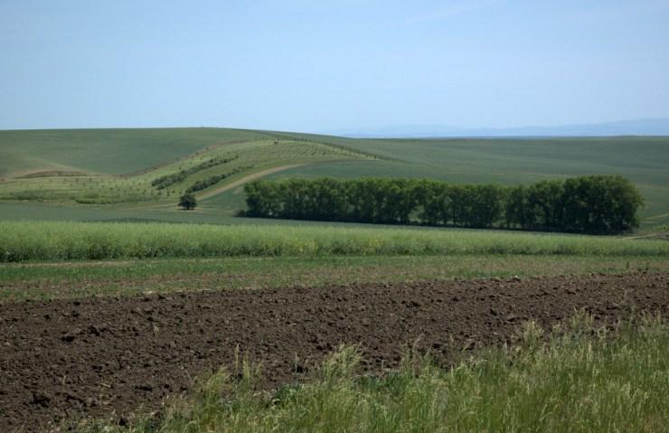 """Intenzívně zemědělsky využívaná krajina v okolí Šardic. Pokud zde nejsou lesy, případně vinohrady nebo sady, krajina nemá žádnou biologickou diverzitu a je """"mrtvá""""."""