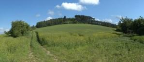 Chlum (402 m) je nejvyšším bodem Bučovické pahorkatiny. Zajímavostí je masívní a spontánní rozšíření šeříku obecného (Syringa vulgaris L.) na lesní pasece na temeni kopce, které je zvláště patrné v období jeho kvetení.