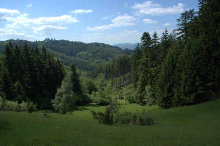 Přírodní památka Dobšena na jih.–záp. úbočí Královce (655 m).