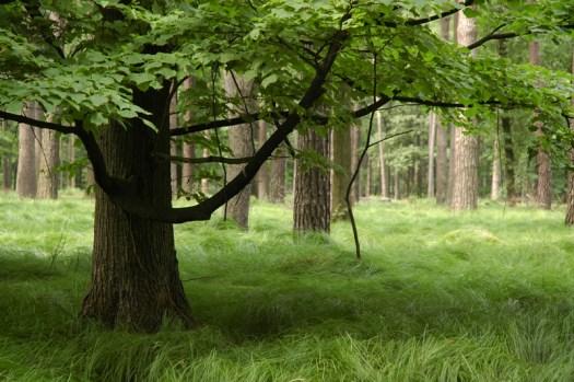 Na podloží neogenních hornin (šlírů) s překryvy sprašových hlín se vyvinuly půdy typu pseudoglejů s charakteristickým pokryvem ostřice třeslicovité (Carex brizoides L.).
