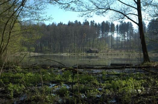 Zadní Opatovský rybník na Švábském potoce.