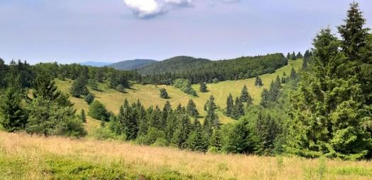 Karpatské květnaté horské louky na temeni Veľkého Javorníku jsou pozůstatkem po valašské kolonizaci, lokalita: vrchol Veľkého Javorníku (1 071 m), území SR.