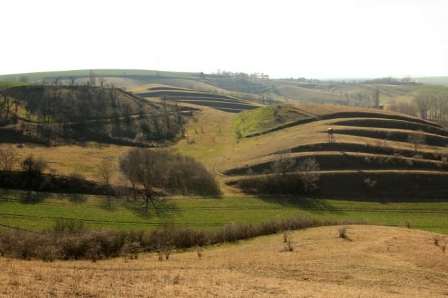 NPP Na Adamcích ve Ždánickém lese představuje vzácná společenstva subpanonských úzkolistých suchých trávníků a širokolistých suchých trávníků.