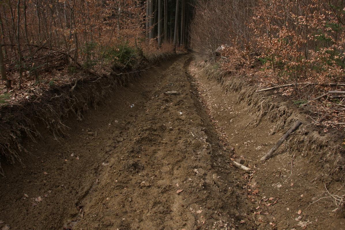 Erozní rýhy na lesní přibližovací cestě.