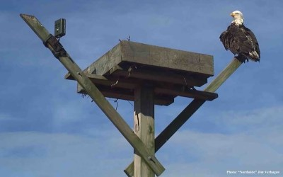 Mordecai Island Eagles: A New 2021 Project Partnership