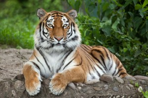 #badasstigerstripes - talking to your teen about stretch marks