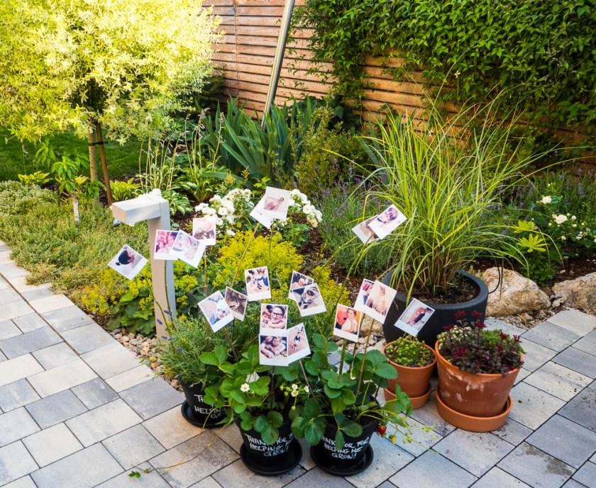 Tontöpfe-Erdbeerpflanzen-Lavendel-Polaroids-Äste