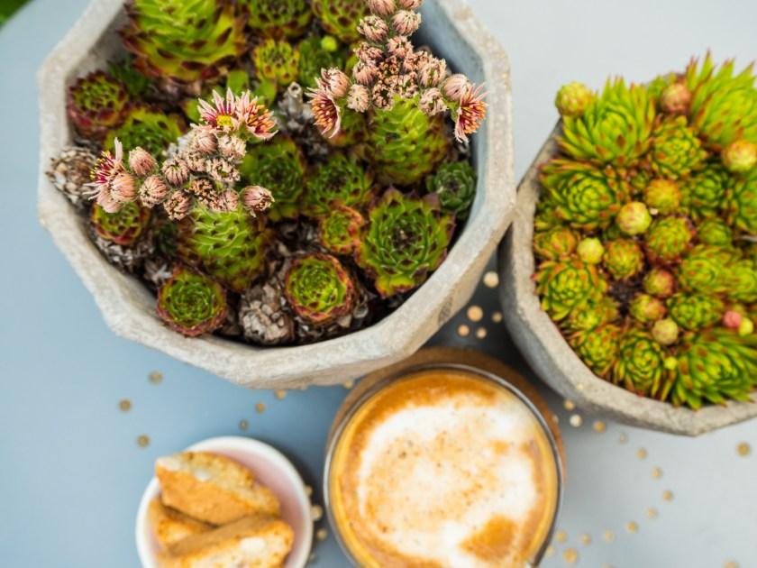 Terrassen-Gestaltung-Kaffee-und-Sukkulenten-auf-Tischplatte
