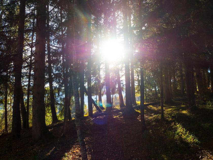 Familienurlaub am Bauernhof Waldlichtung