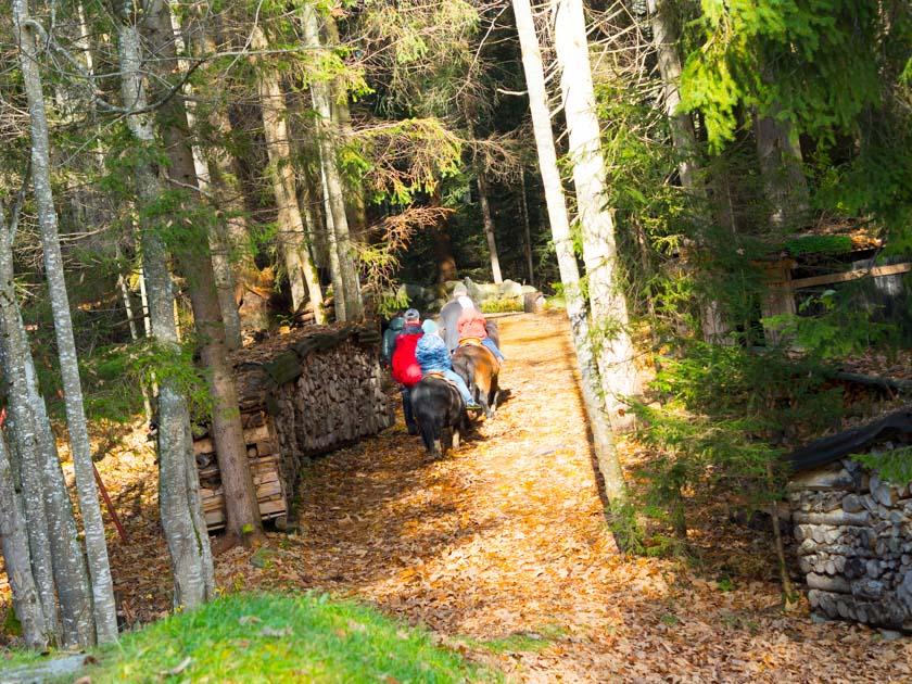 Familienurlaub am Bauernhof Ausritt im Wald