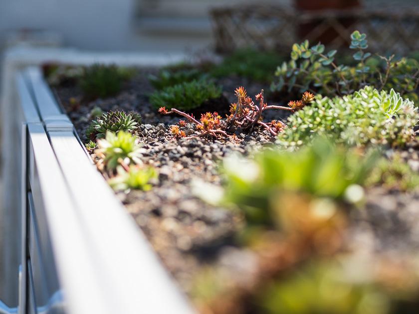Haus Eingangsbereich mit Kindern_pflegeleichte Pflanzen
