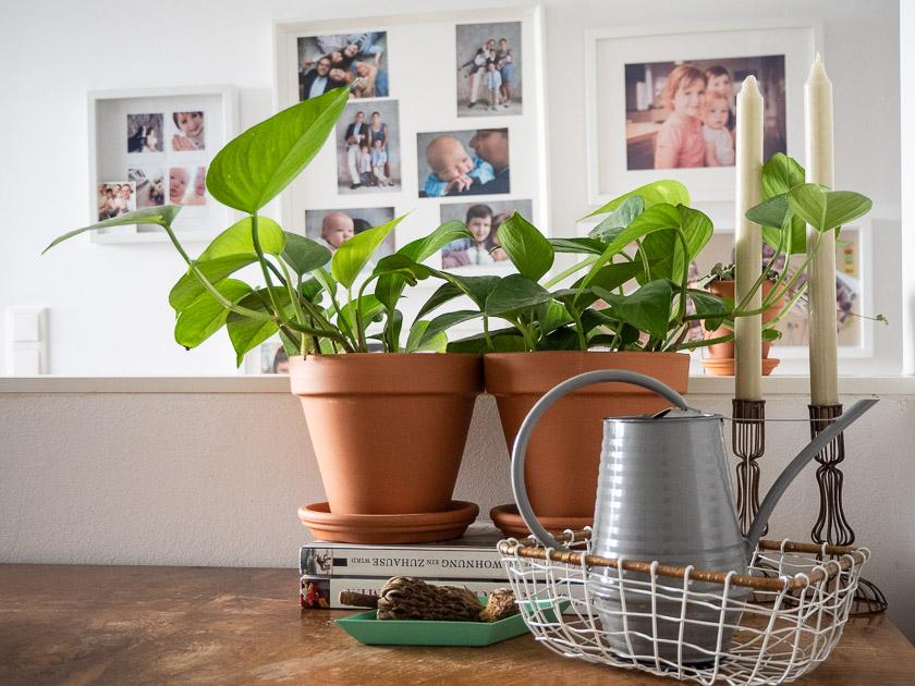 Urban Jungle Trend an Wand_Kommode mit Pflanzen