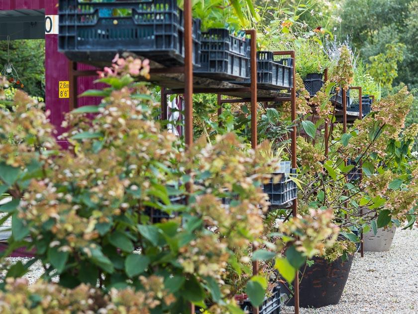 Gartenträume für Familien_Pflanzen