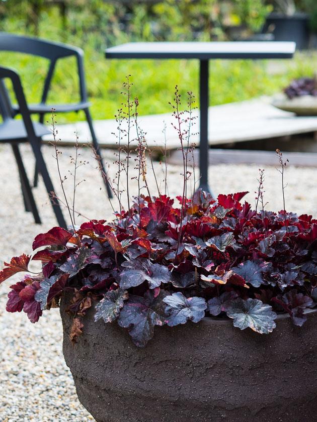 Gartenträume für Familien_Pupurglöckchen