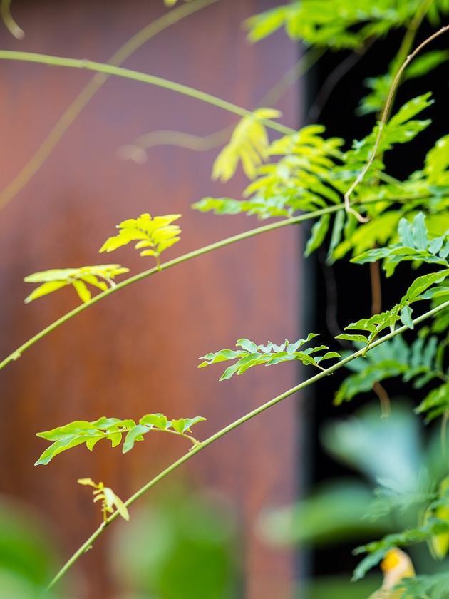 Gartenträume für Familien_Kletterpflanzen