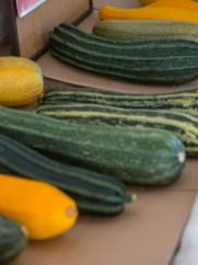 Landlofts von Sonnentor_zucchini
