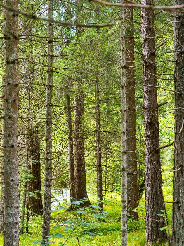 Wildkräuter Familien Wanderung_Wald