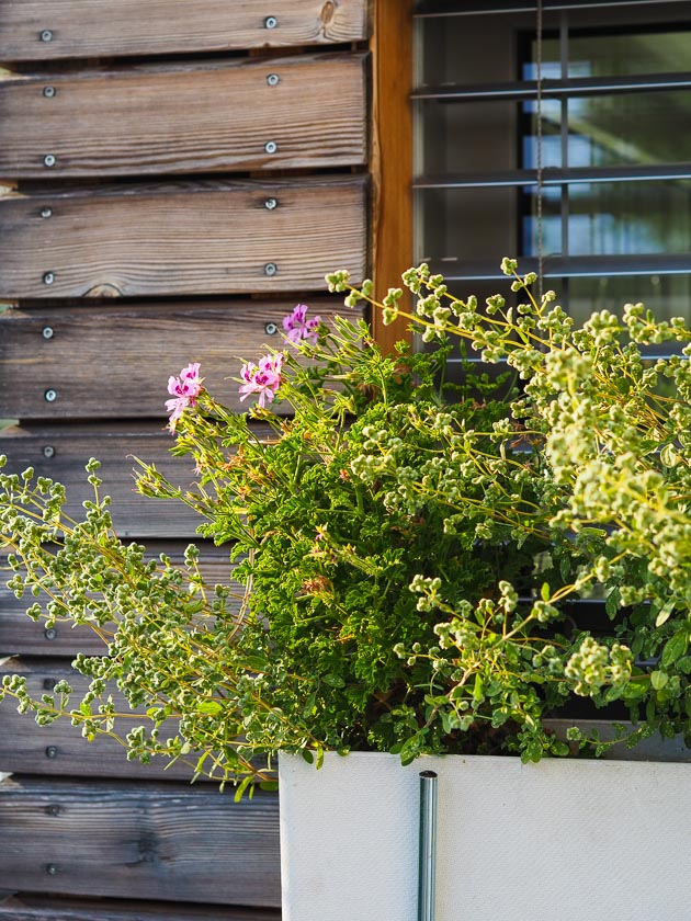 Familiengarten für Faule_Blumenkästen