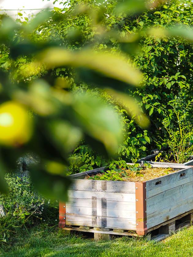 """Familiengarten für """"Faule""""_Hochbeet Erdbeeren"""