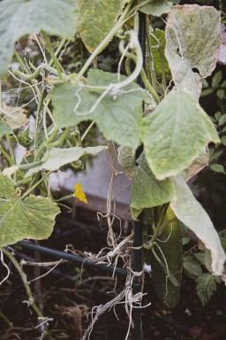 Große Ernte auf kleiner Fläche_goldener Herbst-18