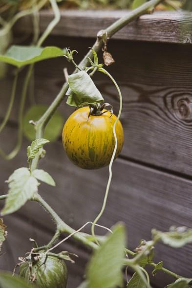 Große Ernte auf kleiner Fläche_goldener Herbst-21