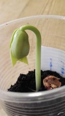 Coltiva una pianta e passaparola - progetto scuola primaria