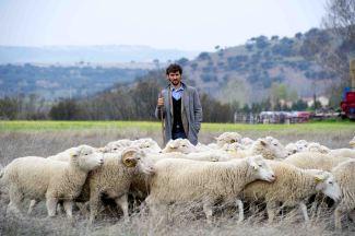 Las ovejas no pierden el tren