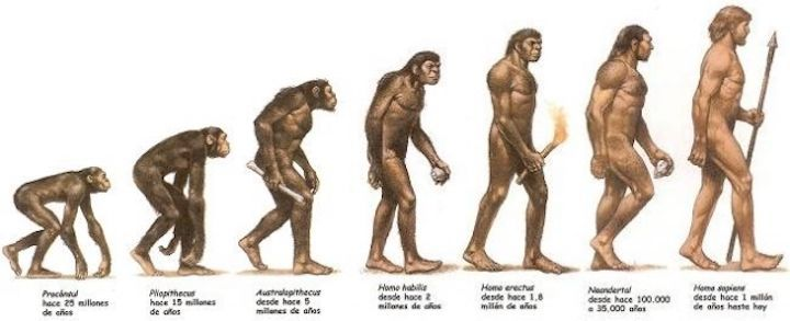 Evolución de mono a hombre