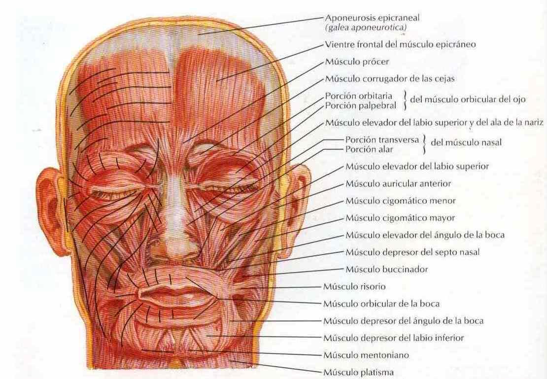 Estética Facial y Boca - Clínica Dental Moreno Cabello - Córdoba