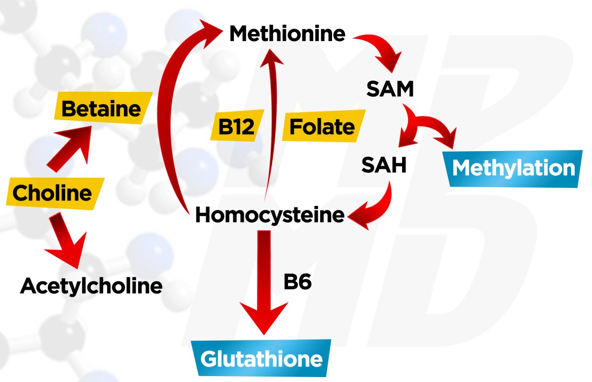Choline To Betaine Pathway To Support Methylation