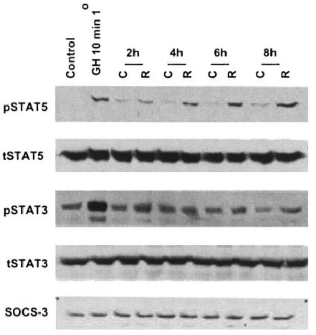 Graphic Illustration Of The Importance of GH pulsatility in stimulating Stat5 phosphor- ylation and IGF-I mRNA expression