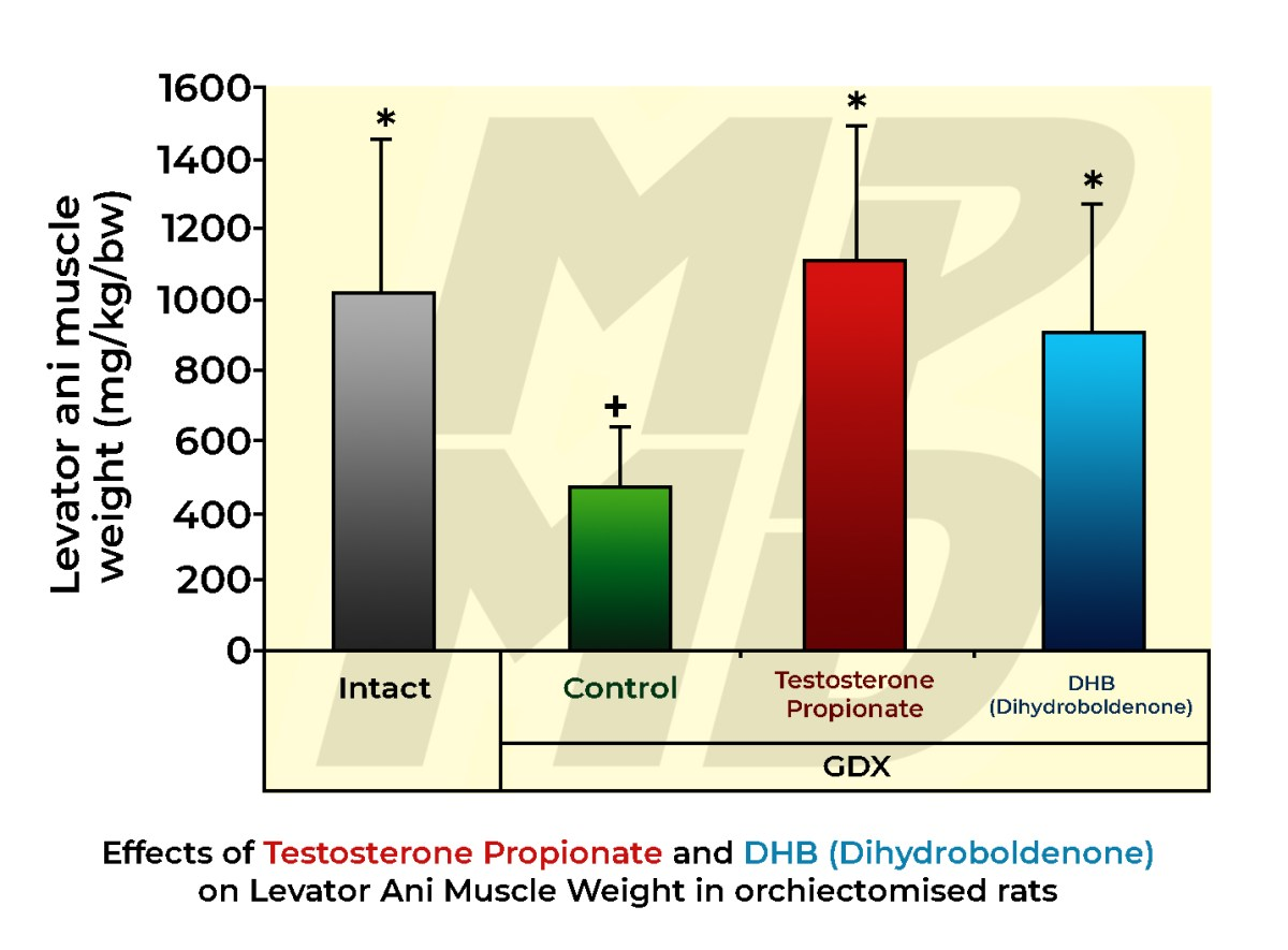 Effects Of Testosterone Propionate and DHB (Dihydroboldenone) on Levator Ani Muscle Weight in orchiectomised rats