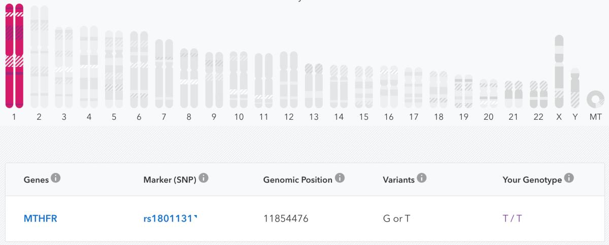 MTHFR SNP rs1801131 23&Me Genotype Results