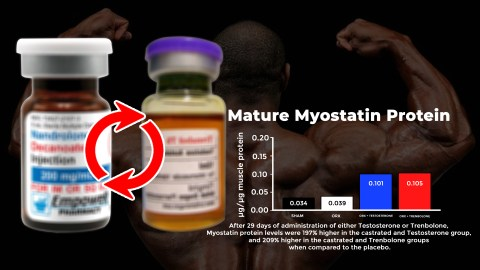Mature Myostatin Protein Levels Increase After Administering Testosterone Or Trenbolone, making switching compounds to avoid androgen receptor downregulation and a plateau on a steroid cycle illogical